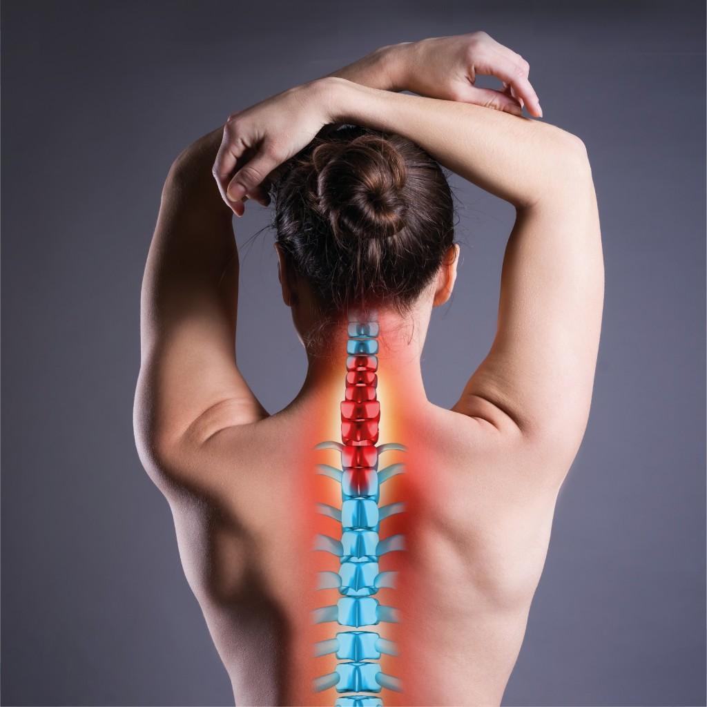 привет, фото мышц спины фото нерф фото позвоночника при хороших